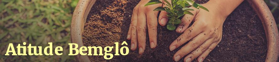 Plantas medicinais para ter no quintal