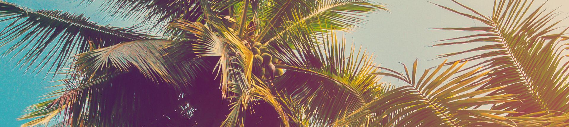 O coqueiro salva vidas: conheça todos os benefícios