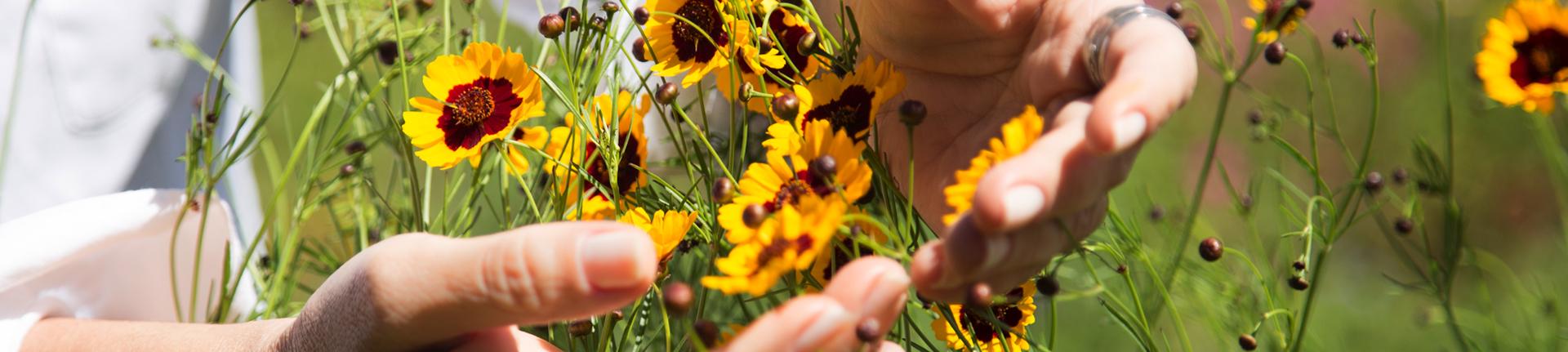 Terapias alternativas: Reiki e Florais de Bach