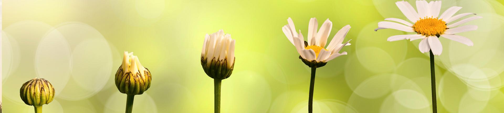 Teoria dos Setênios: o ritmo da natureza em nossa vida