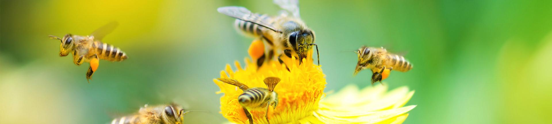 A vida das abelhas e o caos ambiental