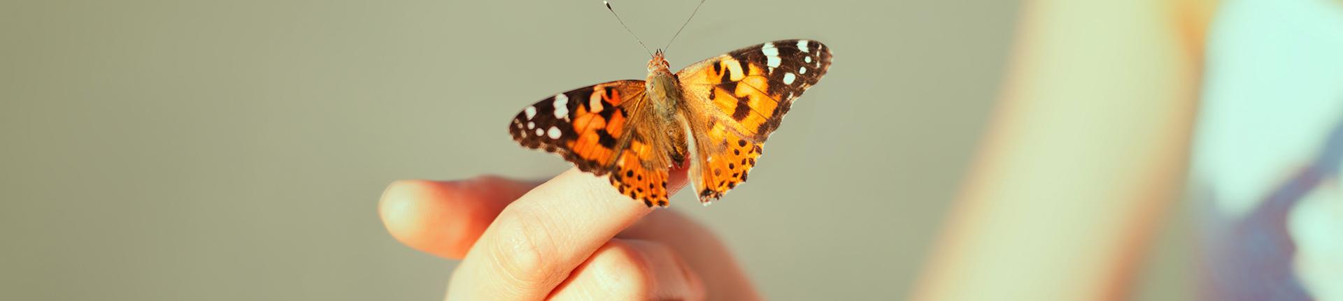 Metamorfose: vida em transformação