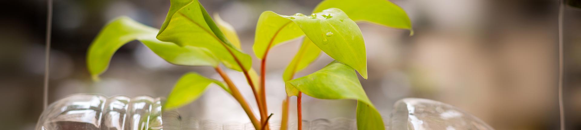 Natureza na decoração: inserindo mais verde em nossas vidas