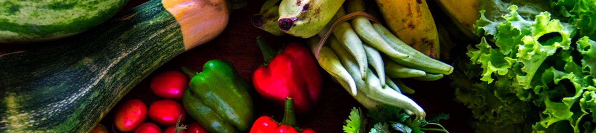 Agrofloresta Sintrópica ensina a plantar comida sem destruir Natureza