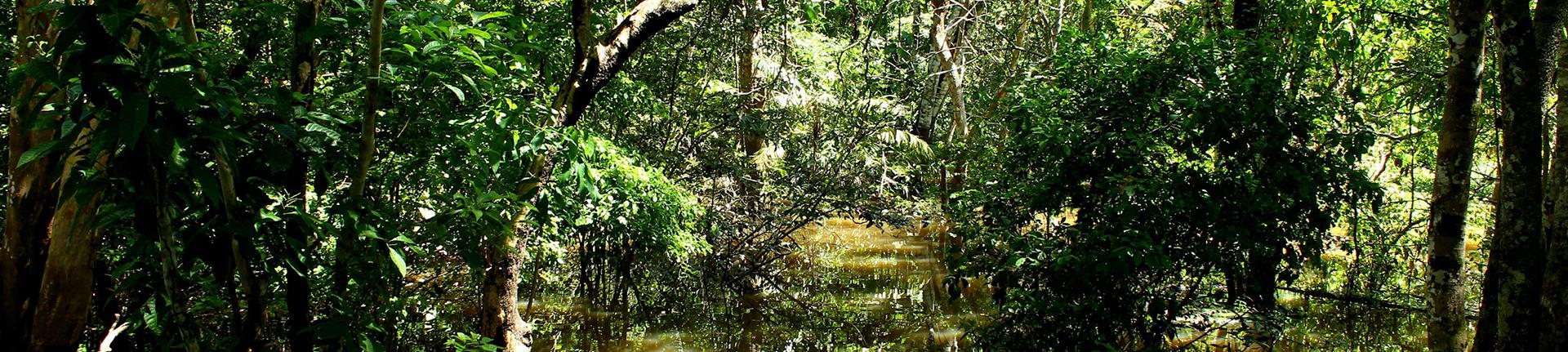 A proteção às florestas no Brasil