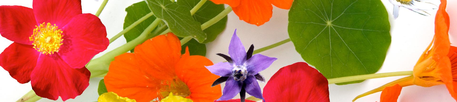 Receitas com Flores Comestíveis