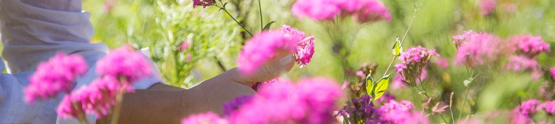 Leve flores para dentro de casa