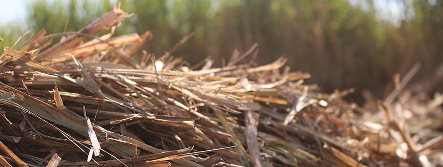 Projeto Sucre: Minimizando os gases de efeito estufa