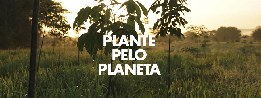 Plante pelo Planeta – Jovens à frente do reflorestamento mundial