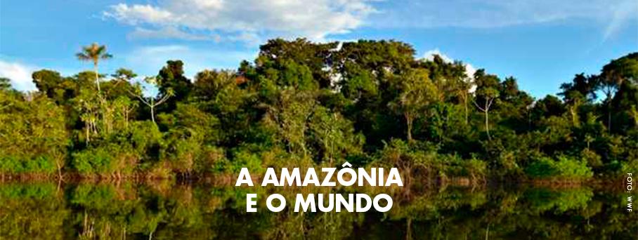Amazônia: berço do clima no Brasil e no mundo