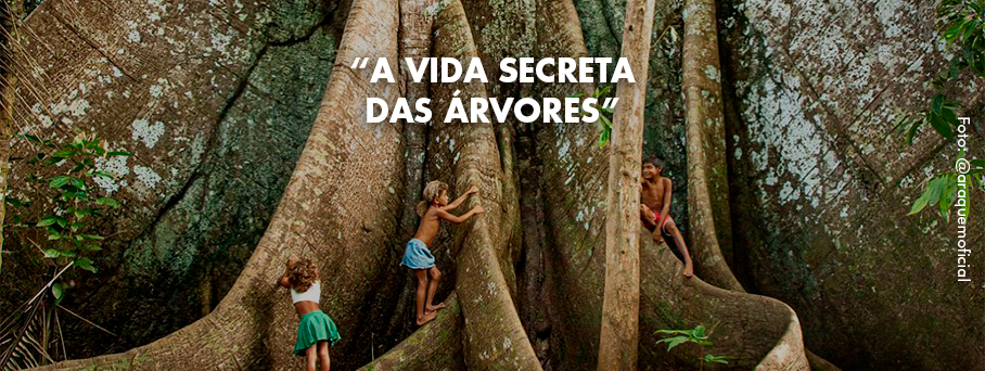 A vida secreta das árvores e o que podemos aprender com elaS