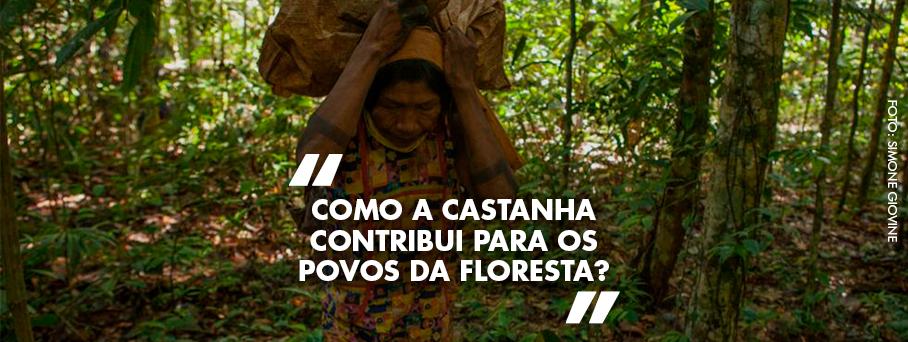Como a castanha contribui para os povos da floresta